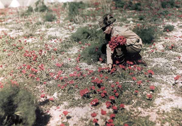 Flowers are always nice (Frank Hurley, photographer)