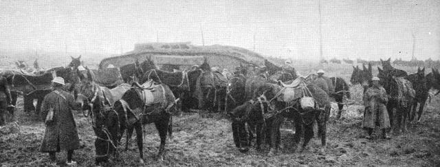 Tank and calvary unit